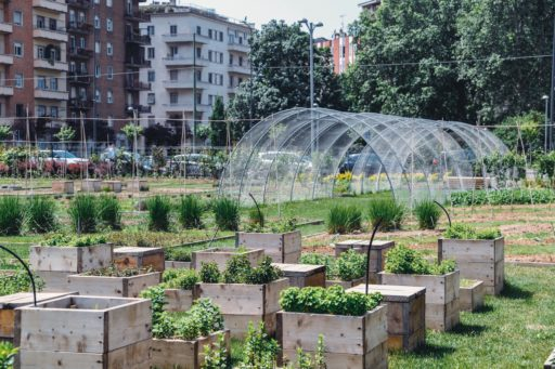 Potager urbain avec serre et bacs à légumes.