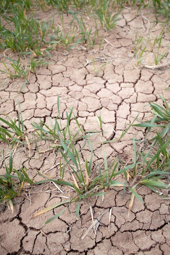 Le sol d'un champ craquelé par une sécheresse