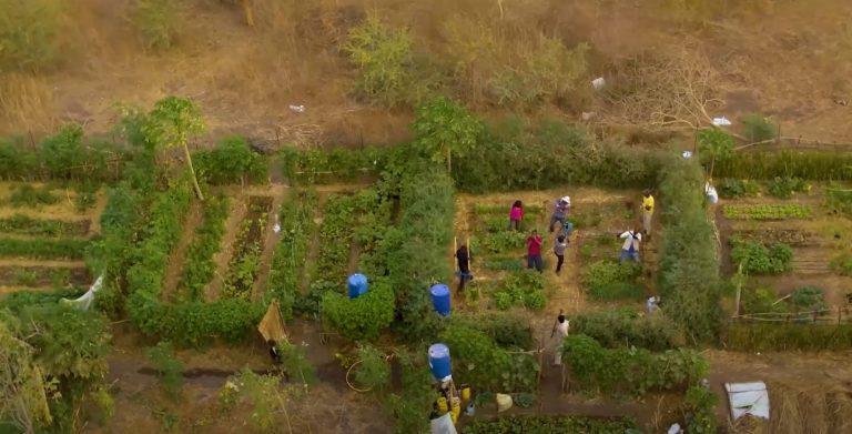 Vue aérienne des plantations en permaculture sur le site de Beer Shéba au Sénégal