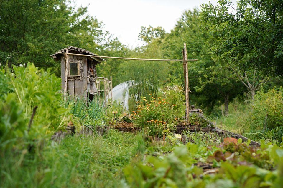 Le potager en permaculture de la Ferme de la Goursaline