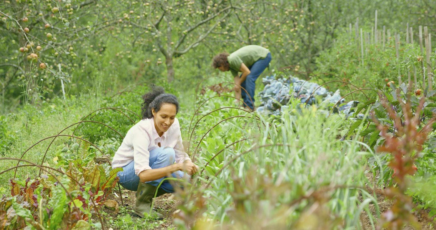 Un jardin cultivé en permaculture